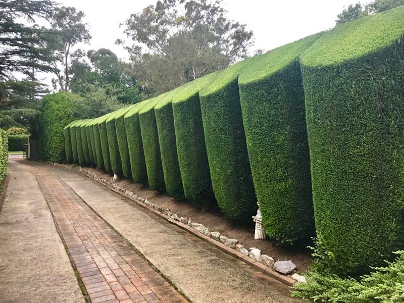 Hedging & Topiary